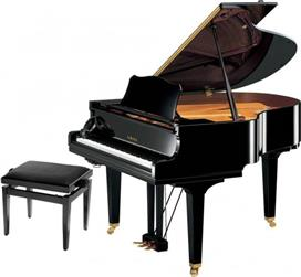 Πιάνα με Ουρά
